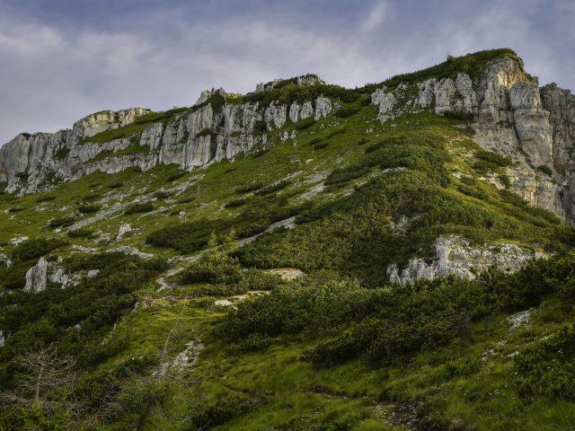 Покрытая зеленью гора в дневное время природа