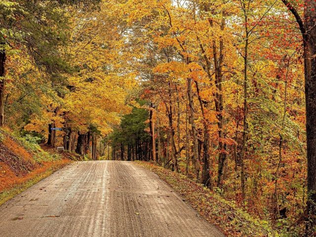 Бетонная дорожка между осенним лесом и природой