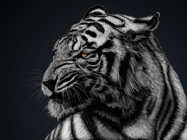Искусство тигра