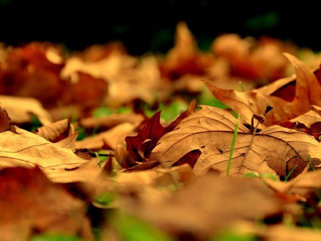 Листья падают вниз между зелеными полями природы