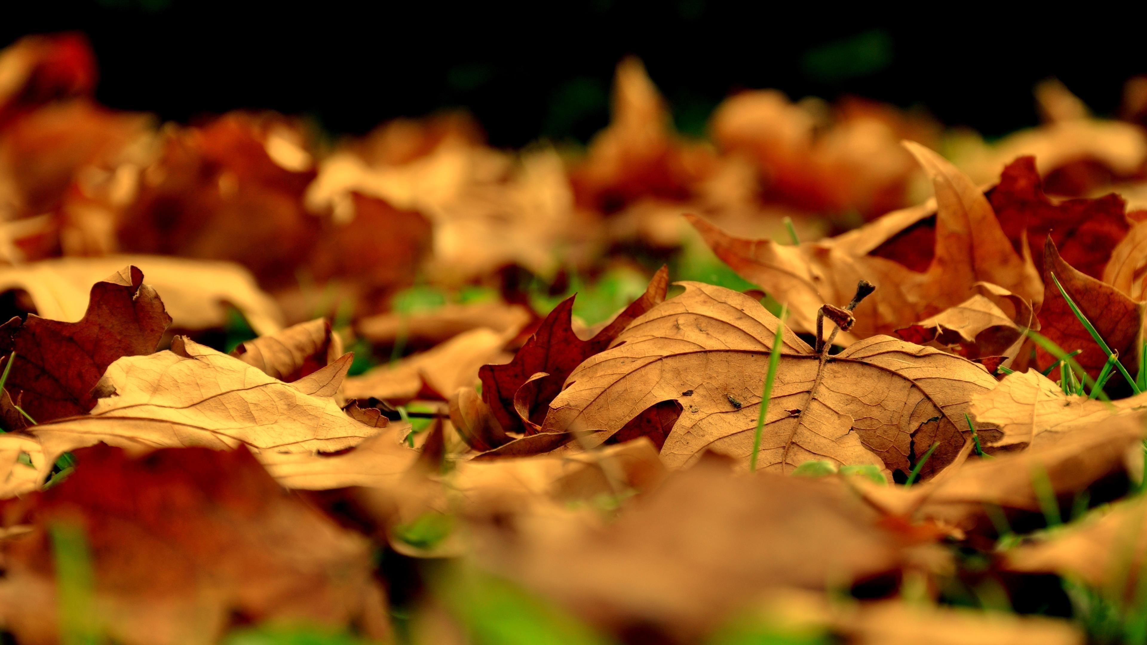 Листья падают вниз между зелеными полями природы обои скачать