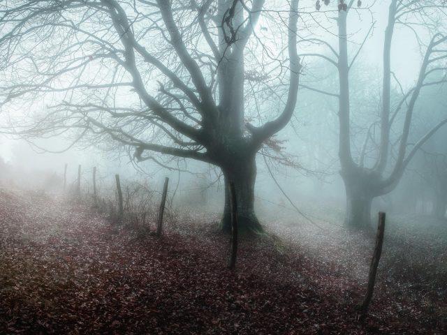 Заснеженный лес с сухим деревом между дорогами природа