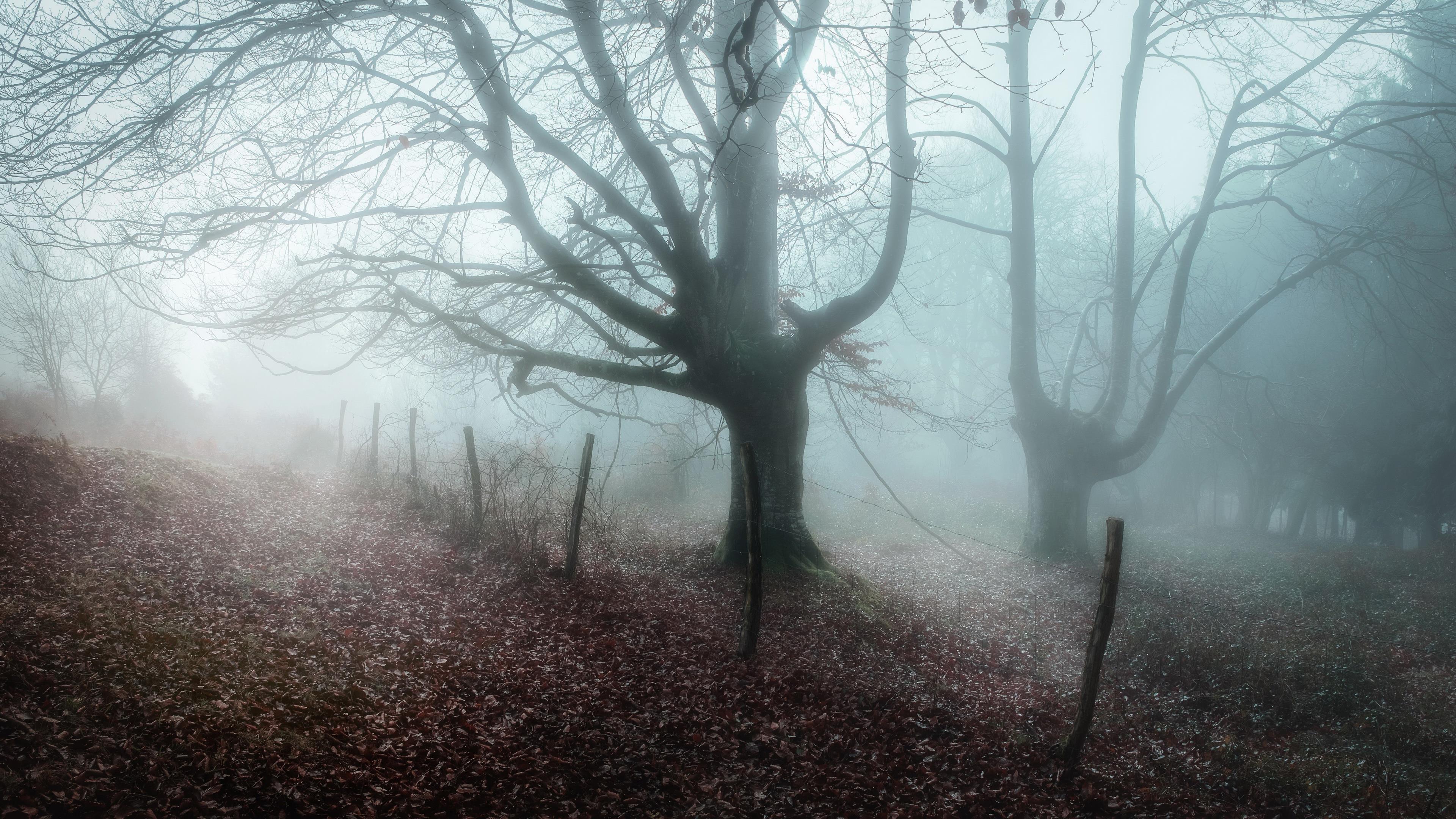 Заснеженный лес с сухим деревом между дорогами природа обои скачать