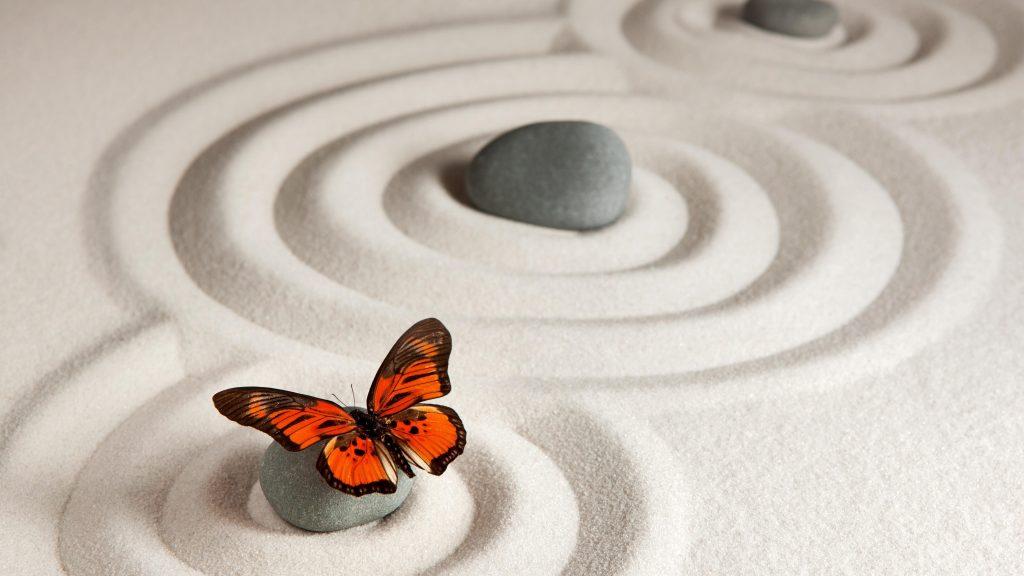 Бабочка монарх бабочка песчаник обои скачать