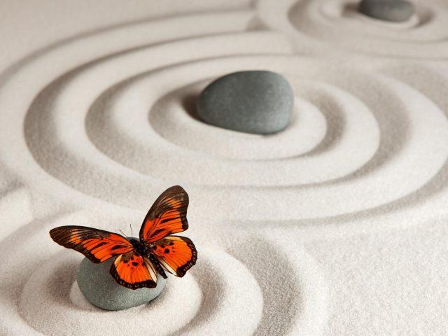 Бабочка монарх бабочка песчаник