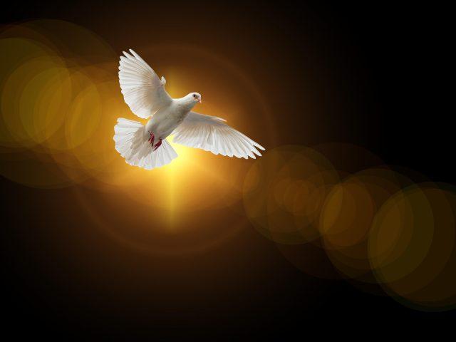 Голубь Вера