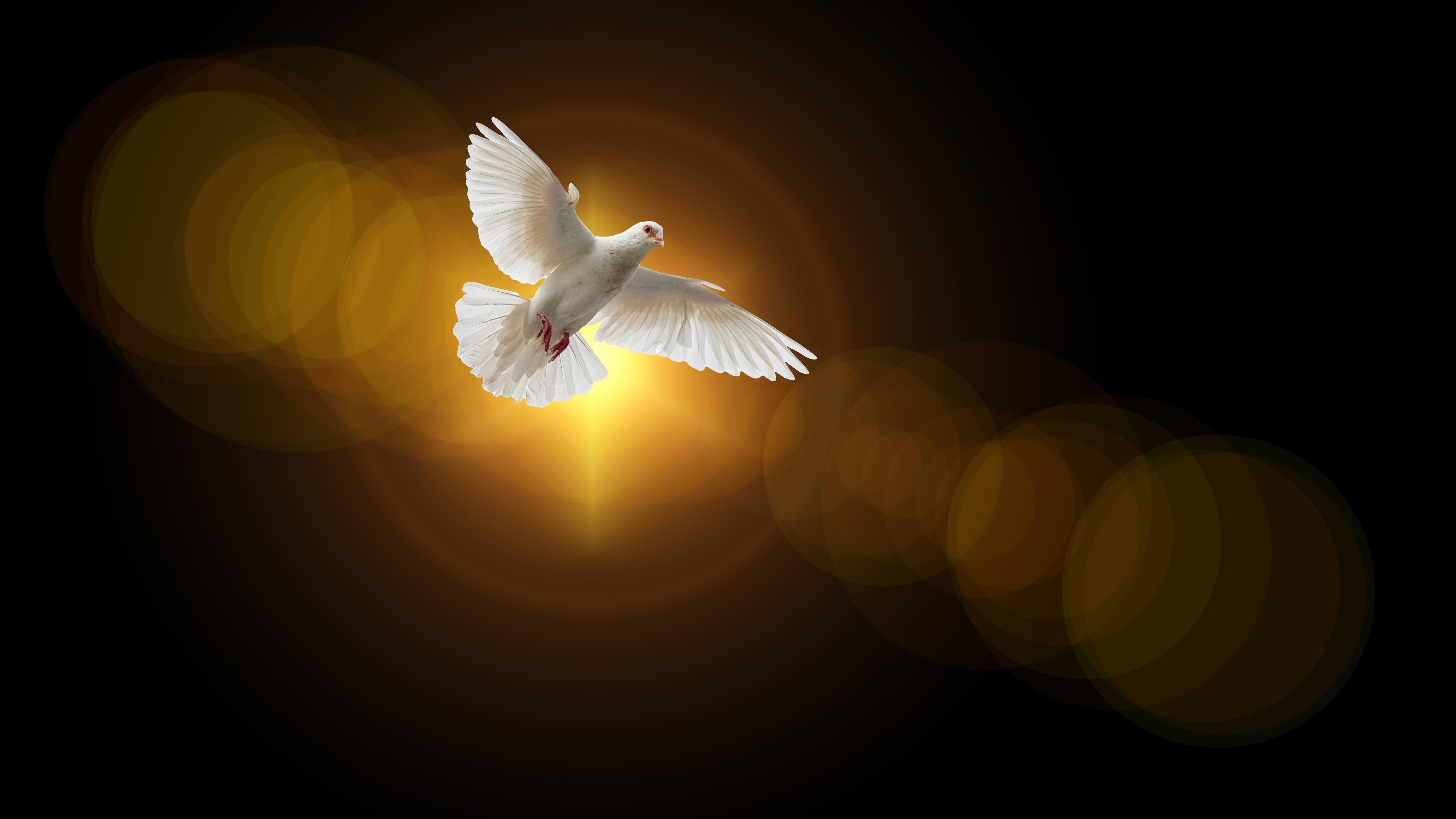 Голубь Вера обои скачать