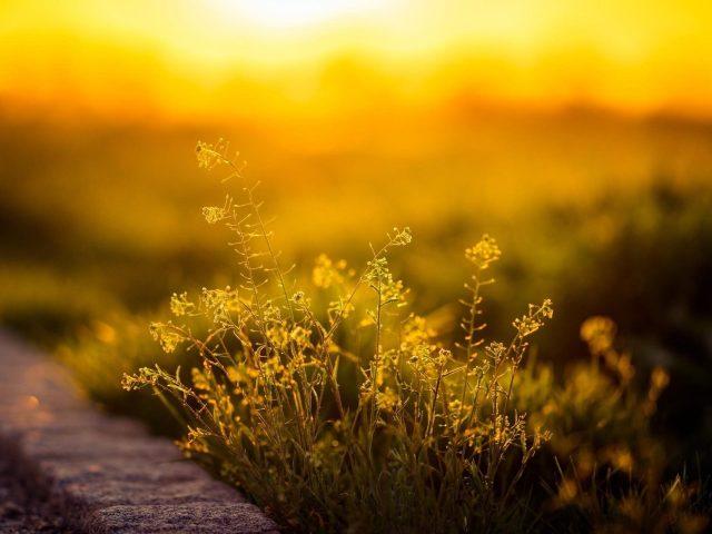 Зеленолистное растение с солнечным светом природа