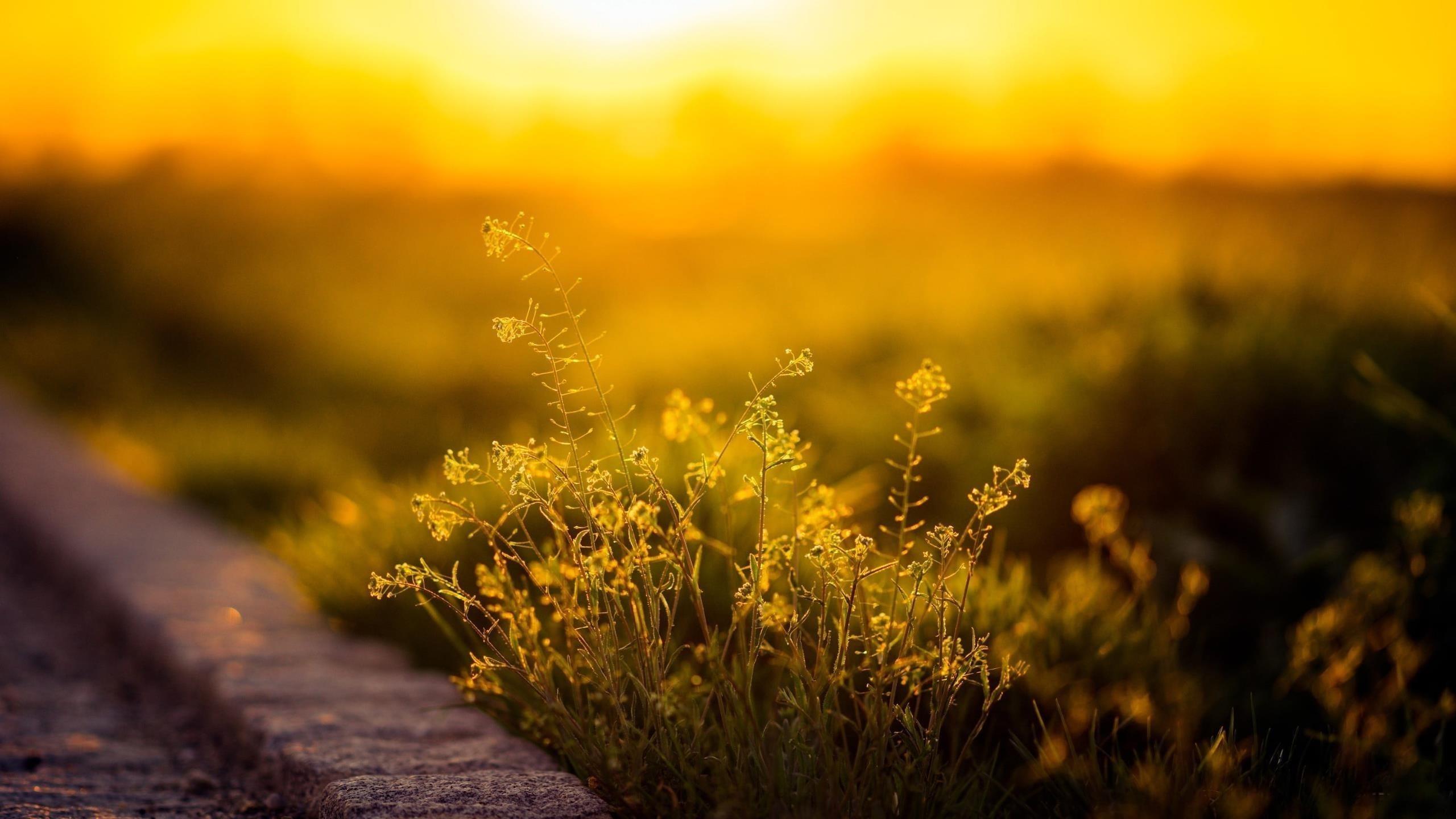 Зеленолистное растение с солнечным светом природа обои скачать