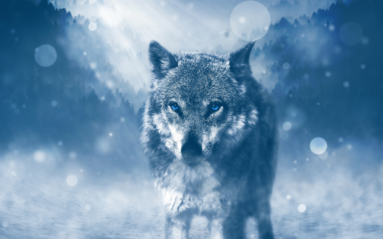 Дикий волк. обои скачать
