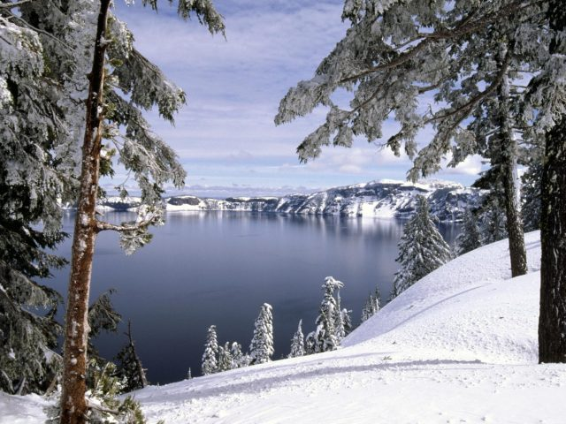 Зима,  снег,  лес,  деревья