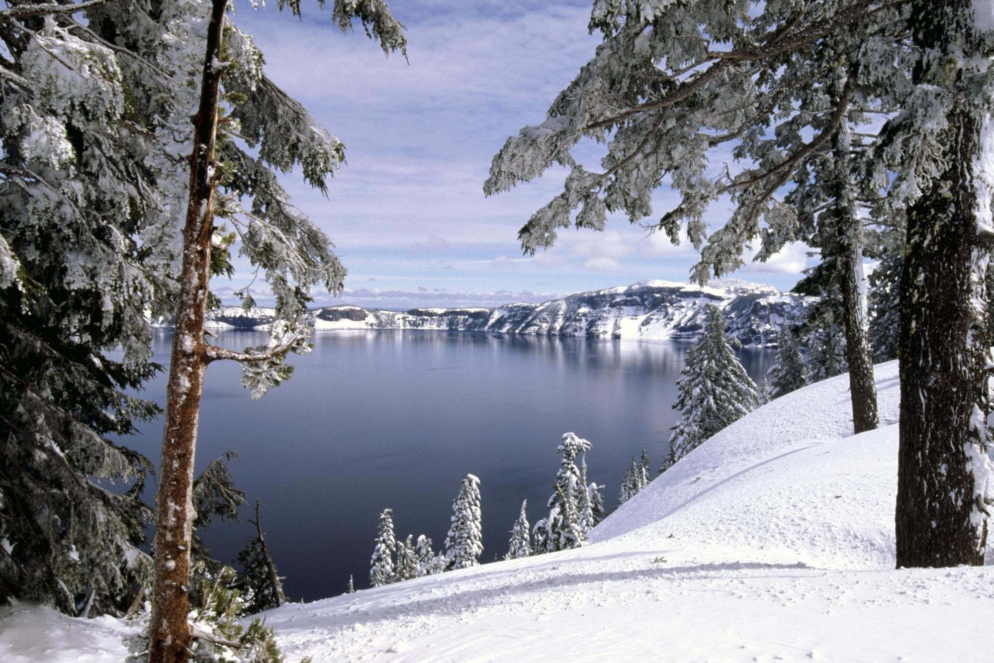 Зима, снег, лес, деревья обои скачать