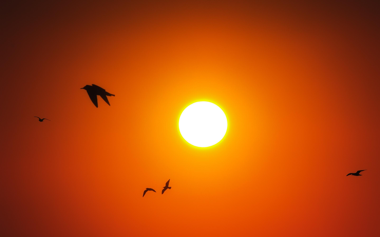 Восход птиц. обои скачать