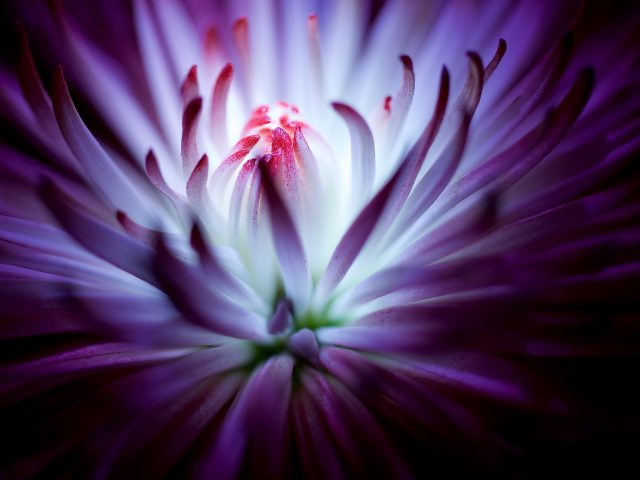 Фиолетовый цветок.