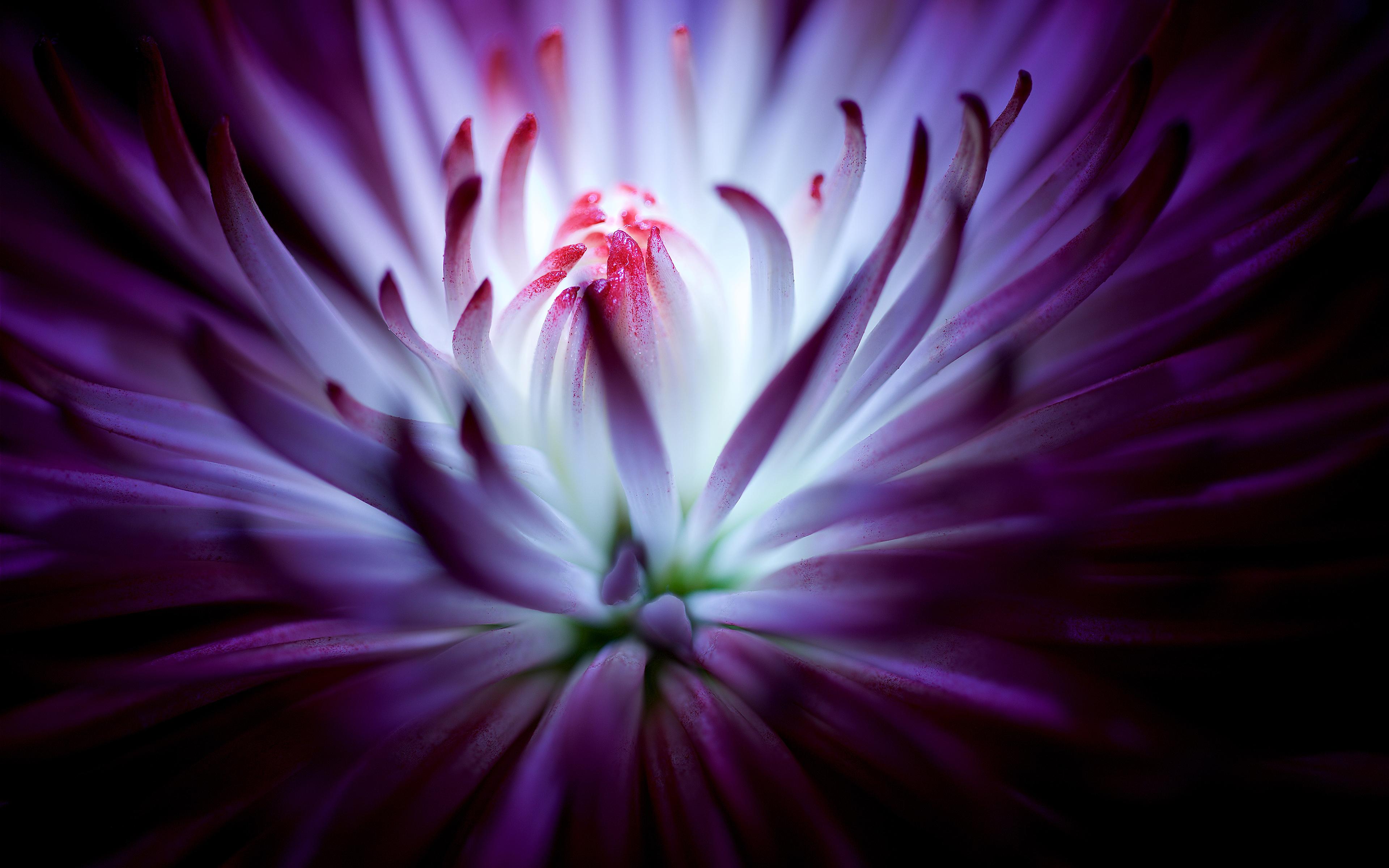 Фиолетовый цветок. обои скачать