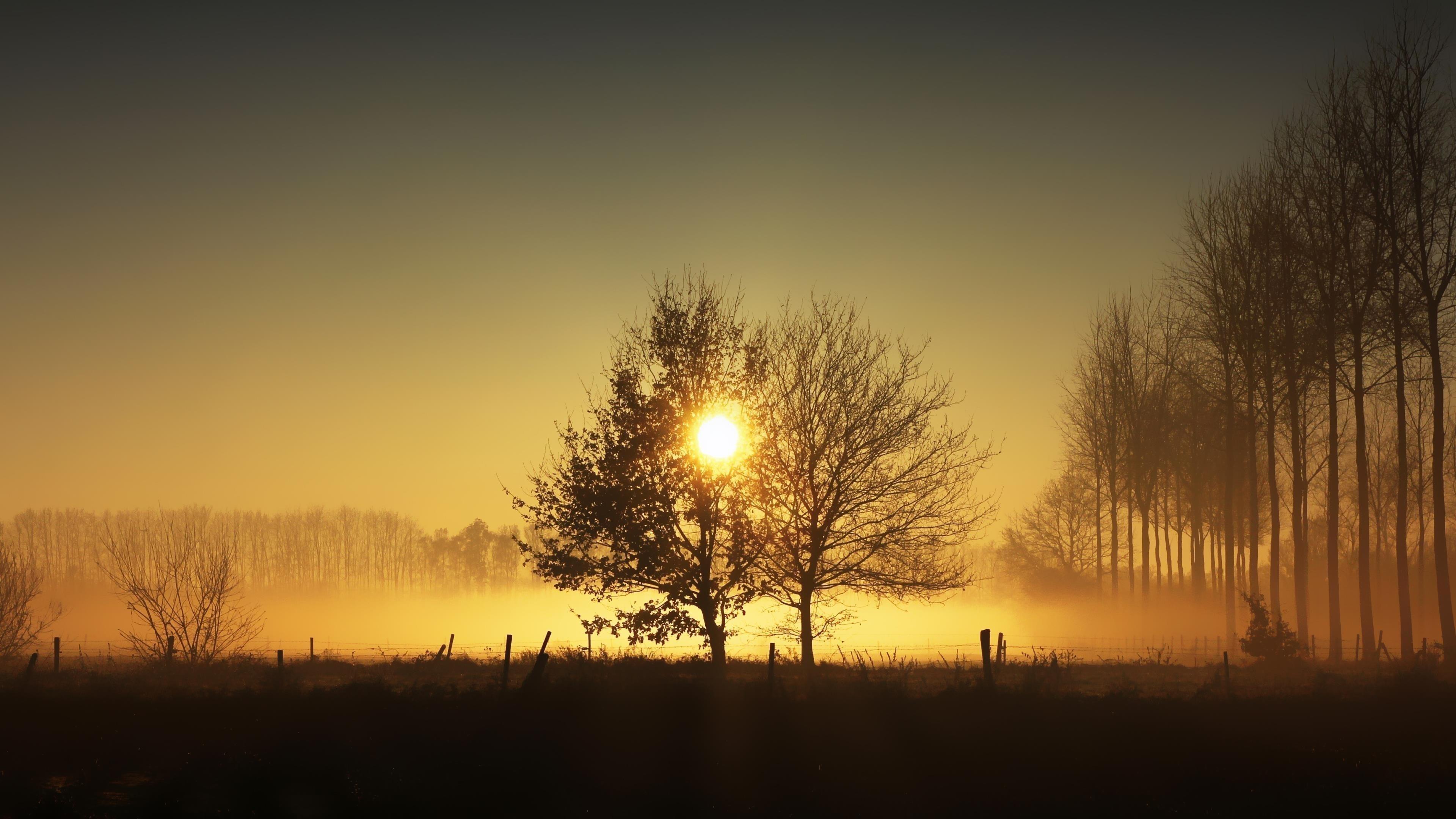 Солнечный свет, проходящий через сухие деревья во время заката солнца природа обои скачать
