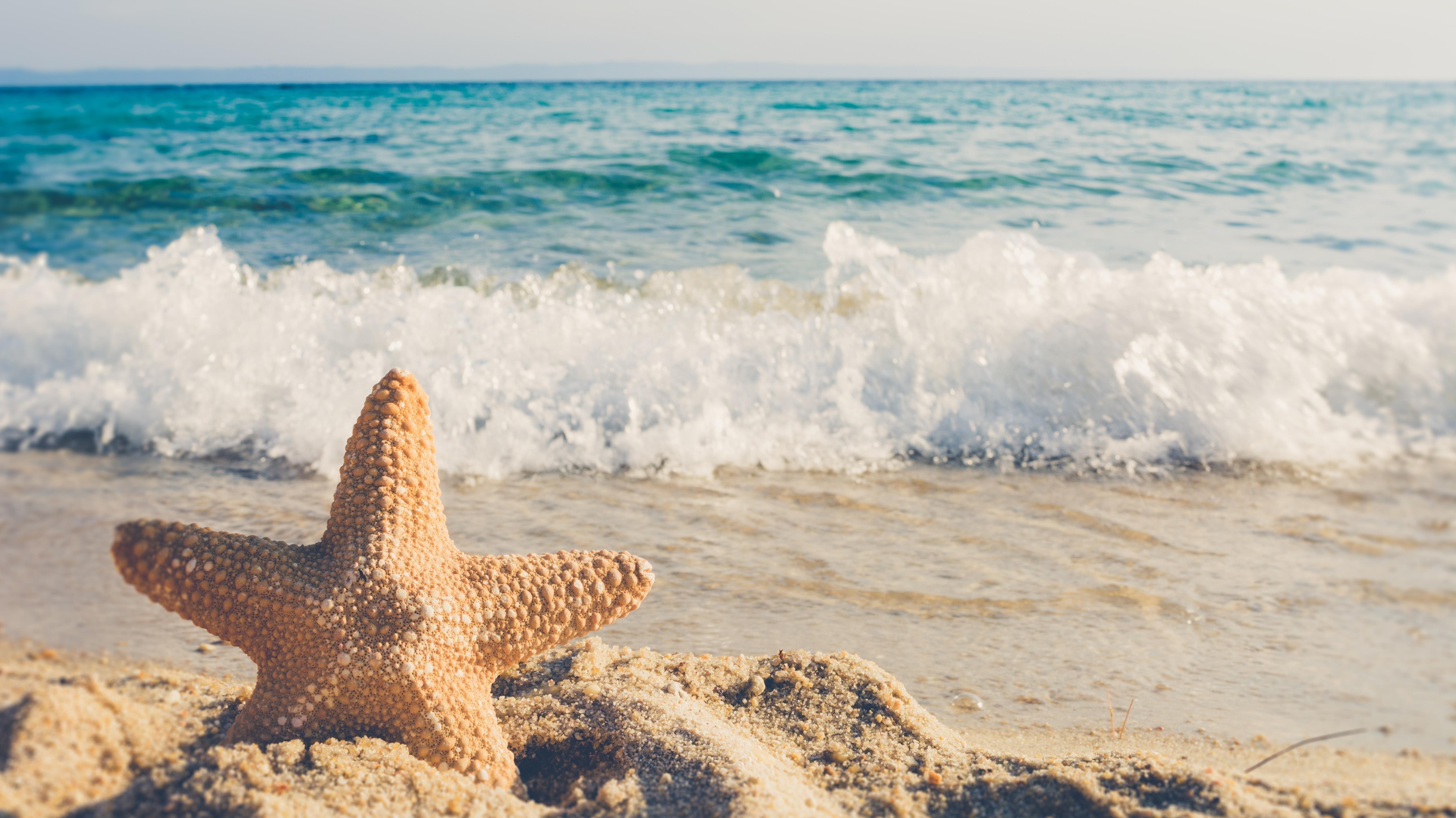 Животные морские звезды обои скачать