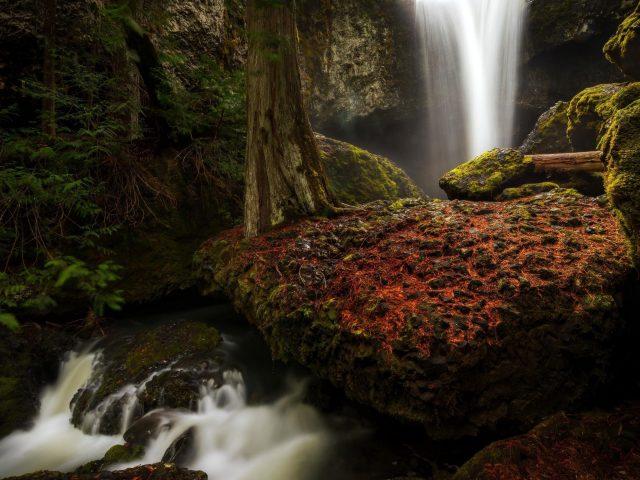 Лес водопад меж зеленых покрытых скал природа