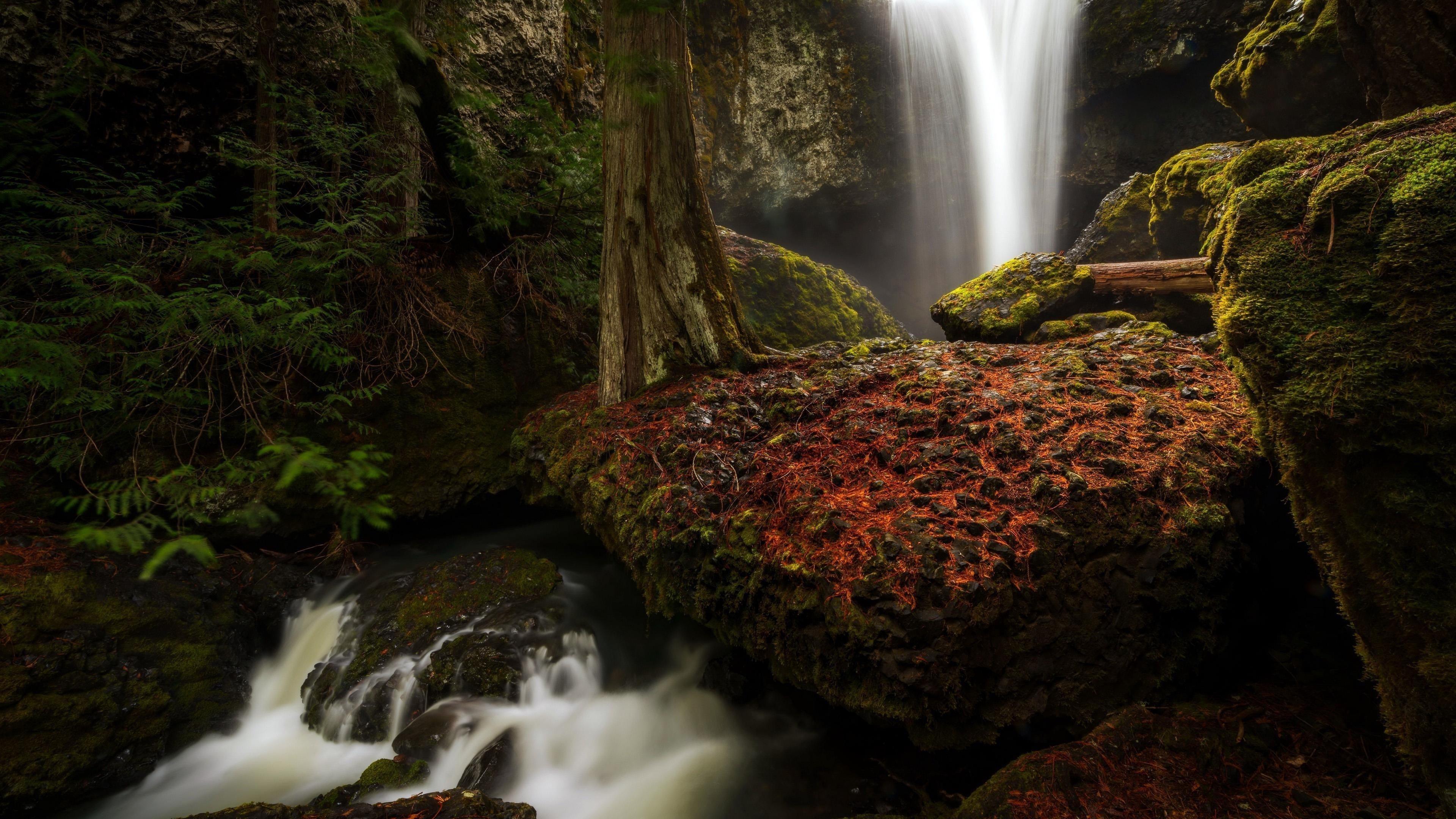 Лес водопад меж зеленых покрытых скал природа обои скачать