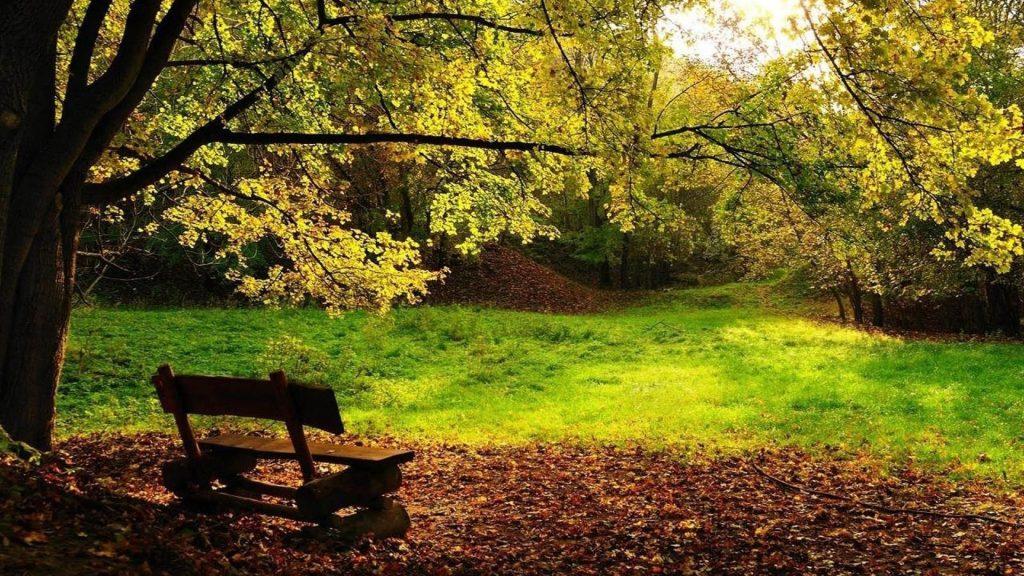 Деревянная скамейка на сухих листьях зеленая трава полевые деревья в лесной природе обои скачать