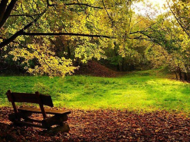Деревянная скамейка на сухих листьях зеленая трава полевые деревья в лесной природе