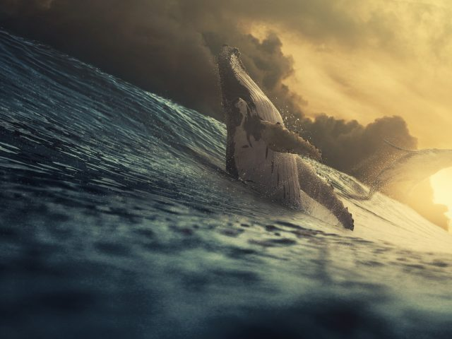 Кит в море