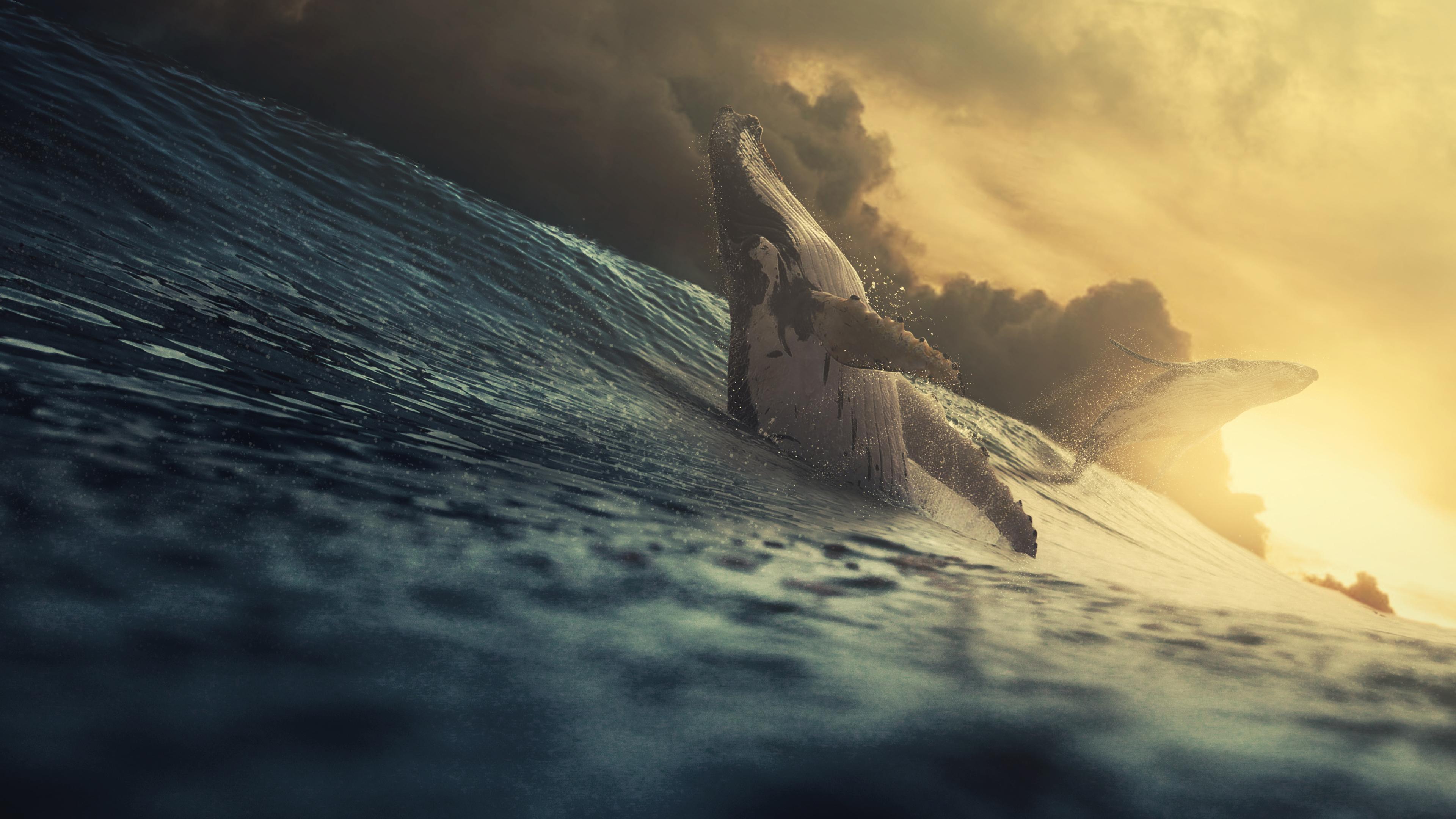 Кит в море обои скачать