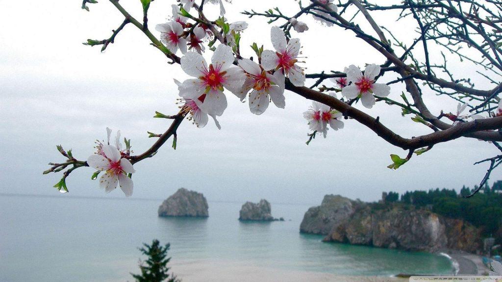 Белые ветви цветут цветы на фоне моря цветов обои скачать