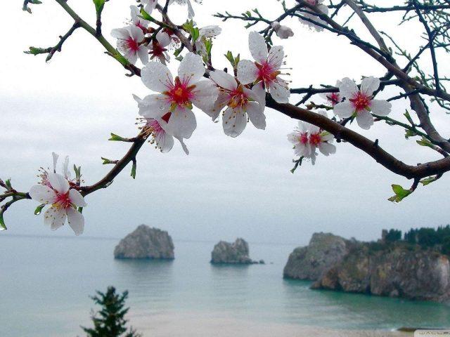 Белые ветви цветут цветы на фоне моря цветов