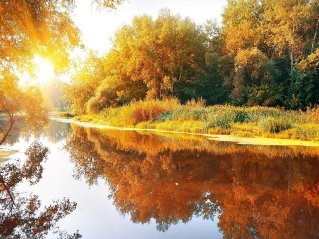 Река между желто зелеными листьями деревьев покрыта лесом с отражением на воде во время солнечных лучей природа
