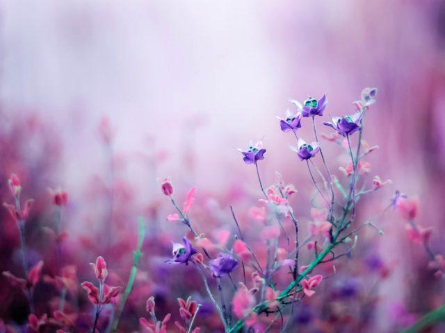 Розовый бегония цветы.