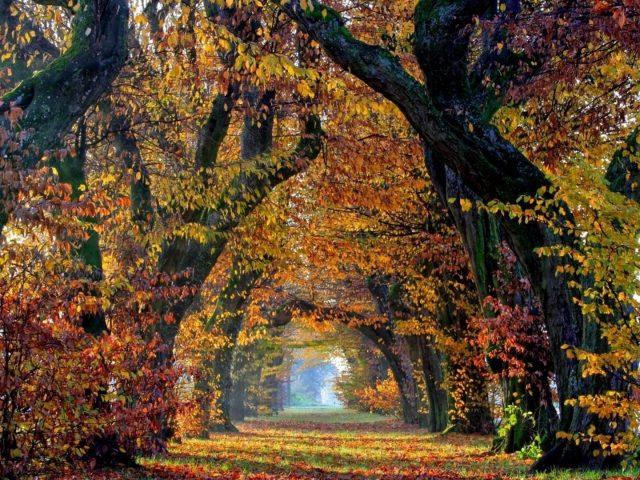 Зеленая травяная дорожка с листьями между осенними деревьями с солнечными лучами природа