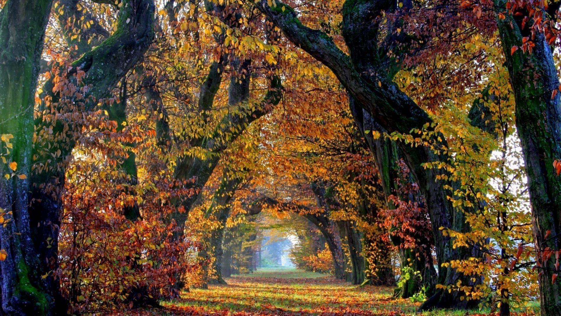 Зеленая травяная дорожка с листьями между осенними деревьями с солнечными лучами природа обои скачать
