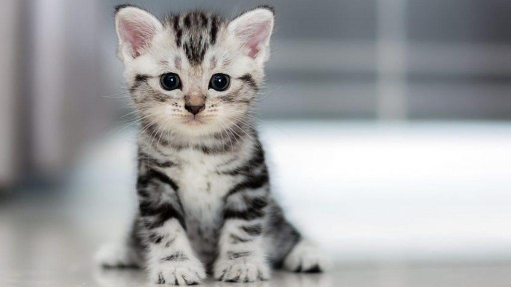 Белый черный кот котенок сидит на полу в размытом фоне котенка обои скачать