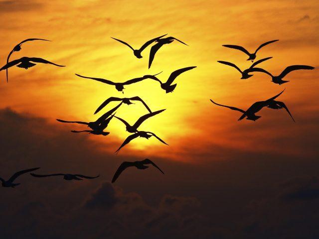 Силуэт птицы на закате