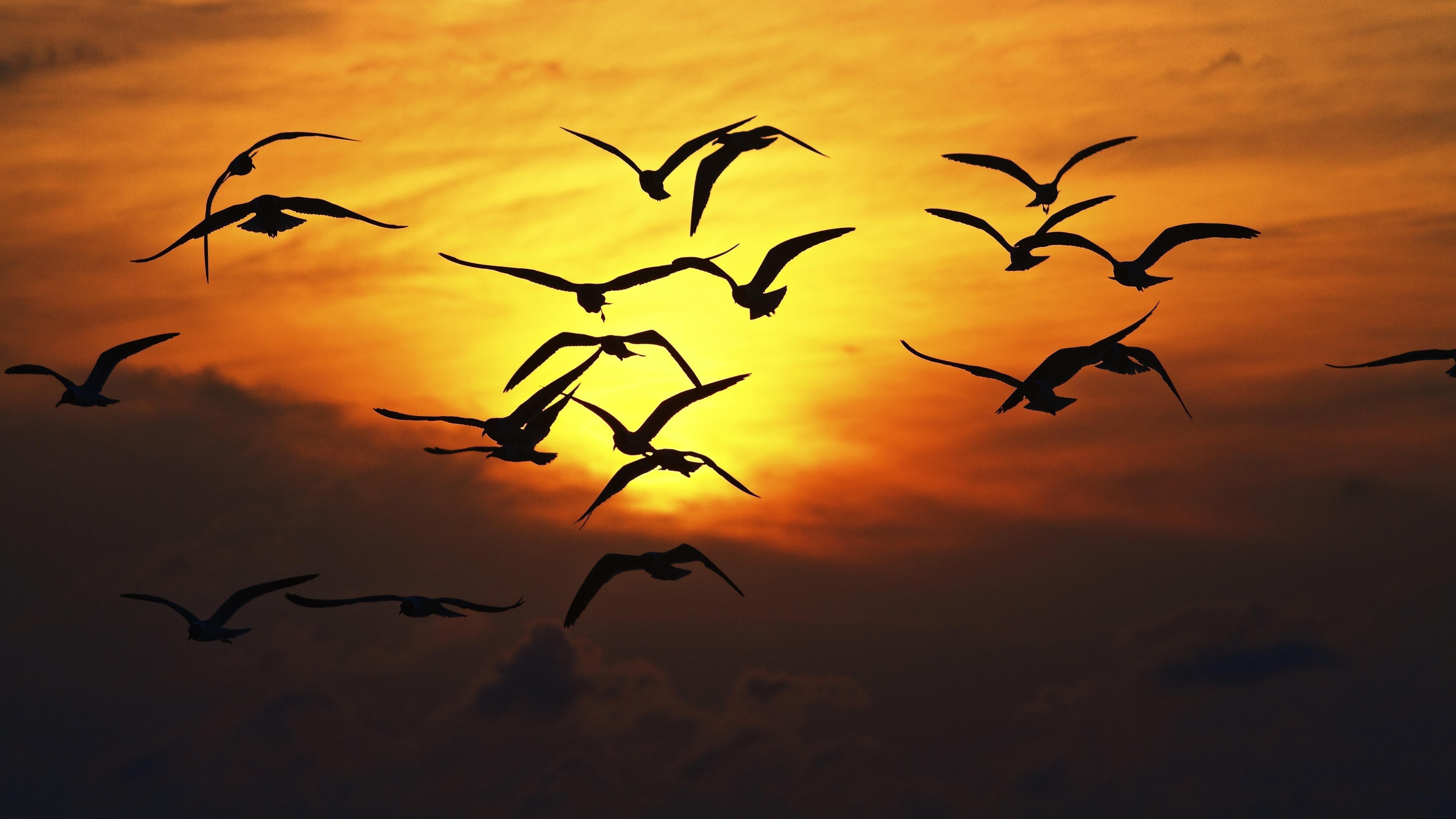 Силуэт птицы на закате обои скачать
