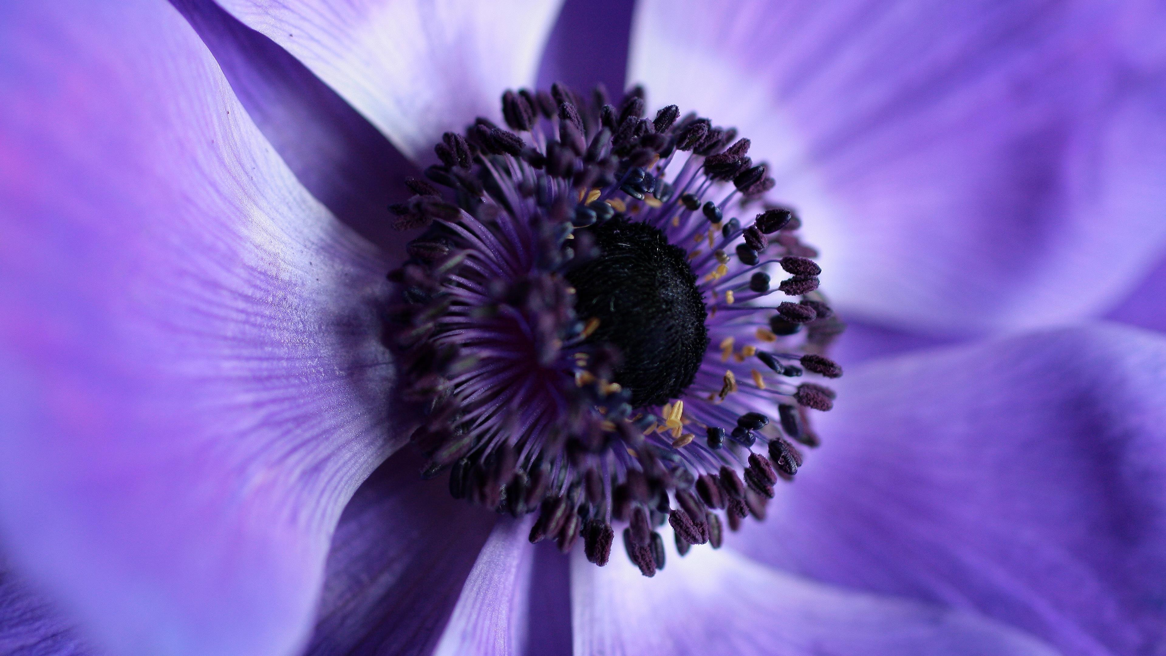 Фиолетовый цветок обои скачать