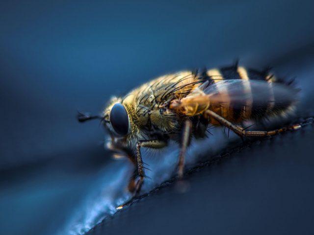 Муха насекомое макро глаза крылья
