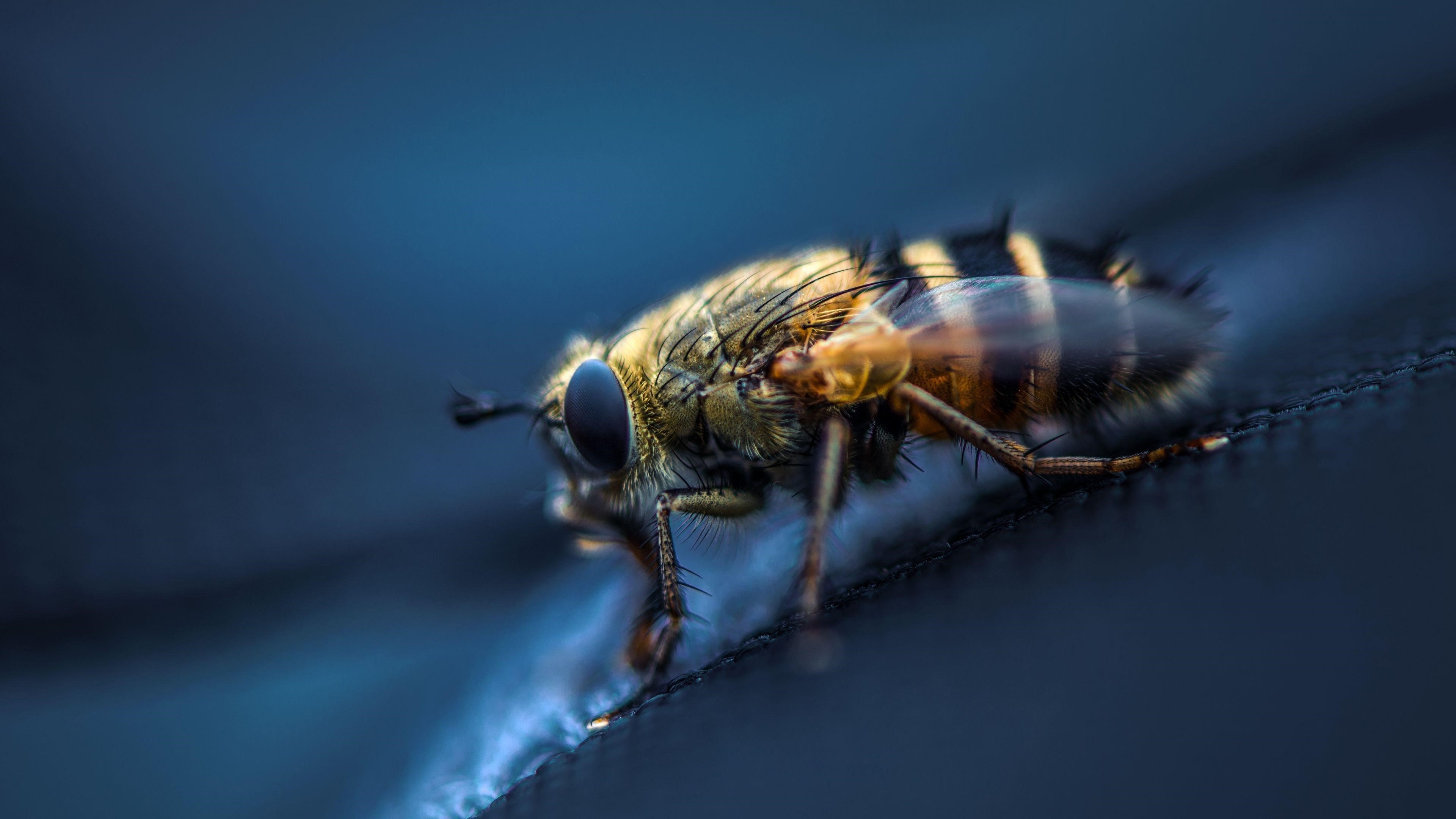 Муха насекомое макро глаза крылья обои скачать