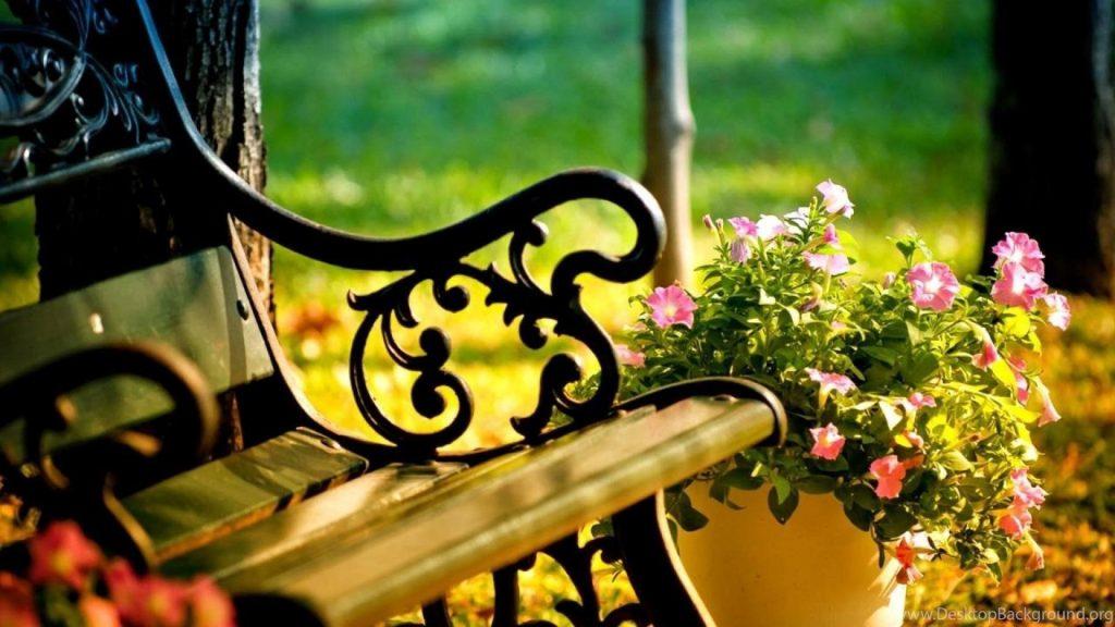 Розовый цветочный горшок рядом с деревянной скамейкой цветы обои скачать