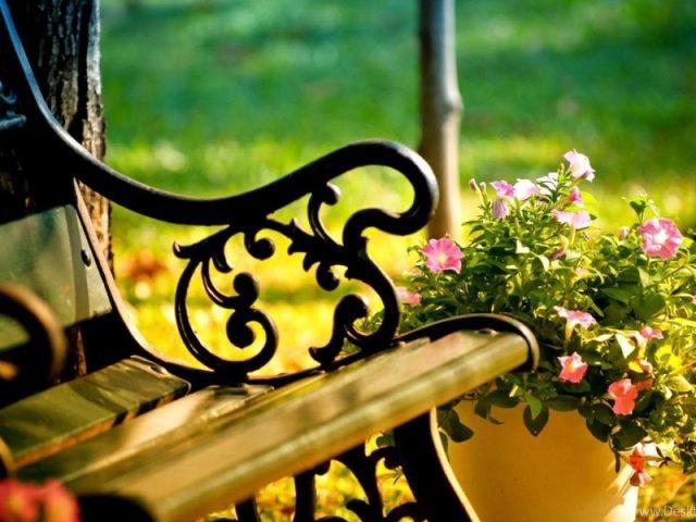 Розовый цветочный горшок рядом с деревянной скамейкой цветы