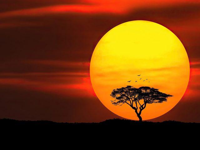 Зонтичный шип закат солнца