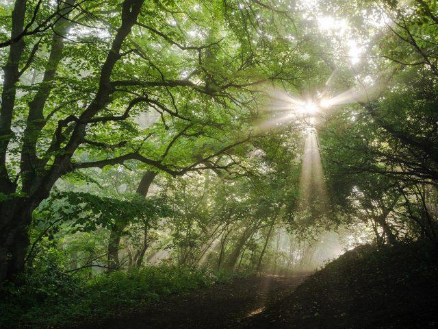 Солнечный свет, проходящий через зеленые листья в лесу в дневное время природа
