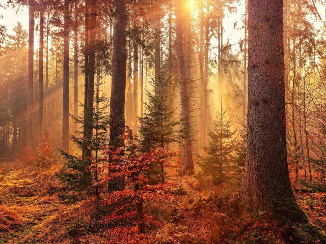 Осенние солнечные лучи лес световые лучи природа