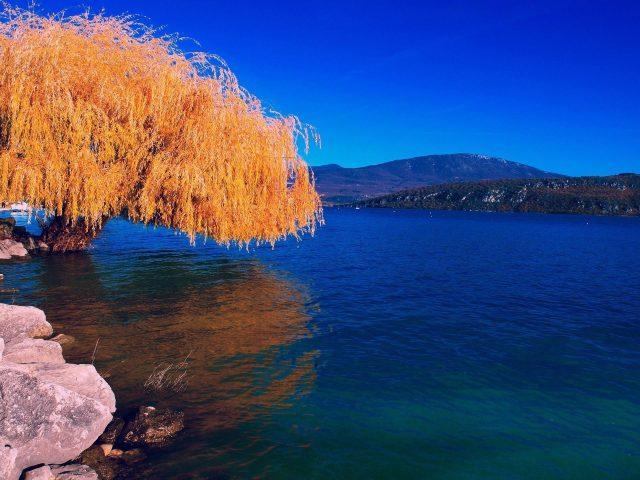 Желтые листья ветви дерева отражение на воде скалы темно-синее небо фон природа