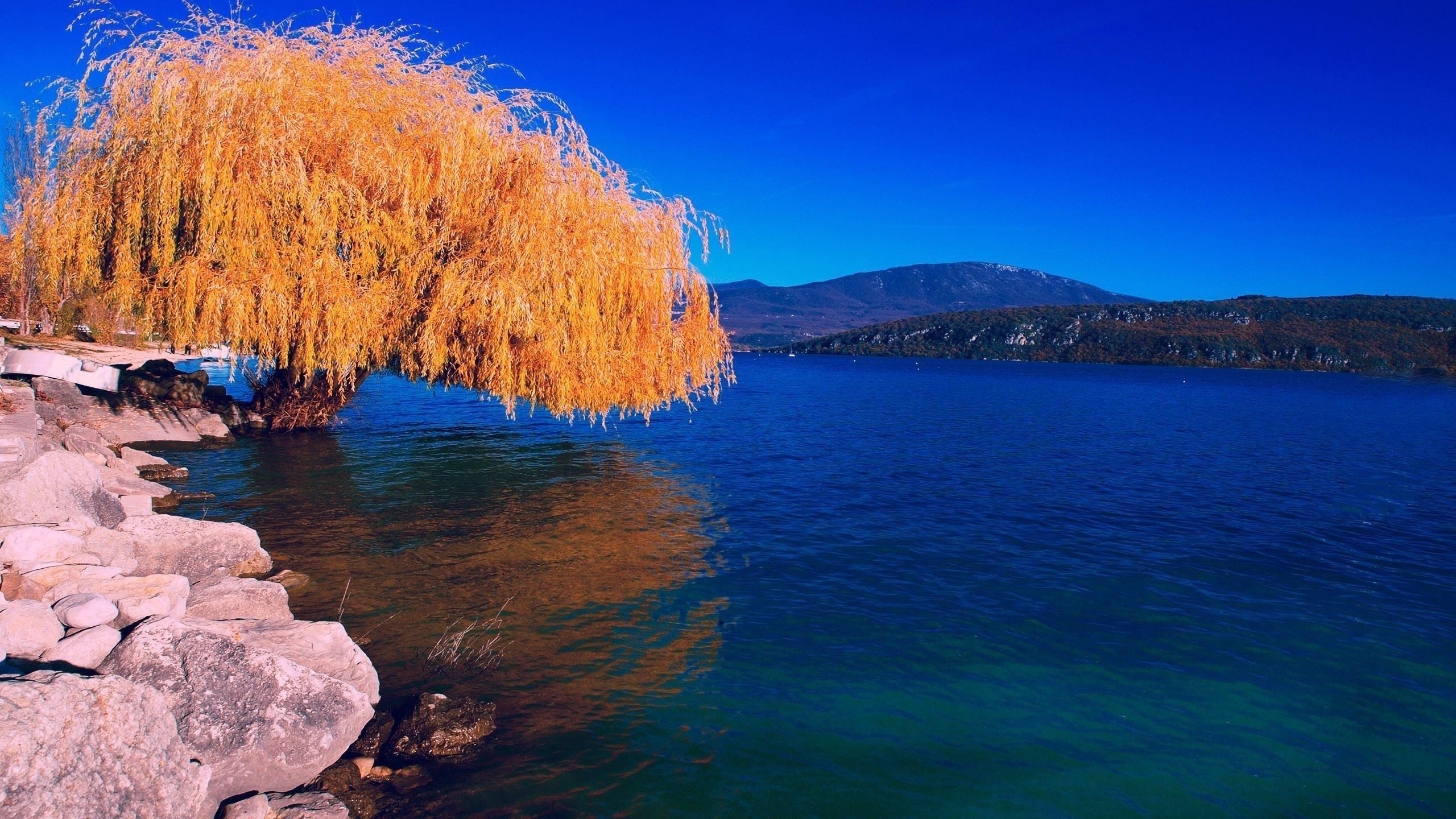 Желтые листья ветви дерева отражение на воде скалы темно-синее небо фон природа обои скачать