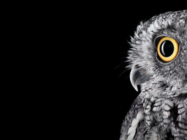 Owl 5k.