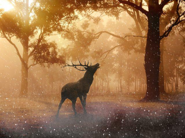 Перелог осень олень