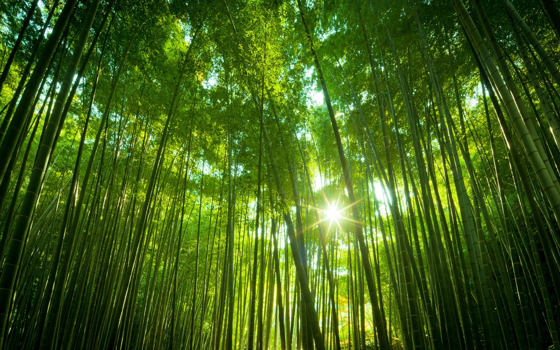 Японский бамбук. обои скачать
