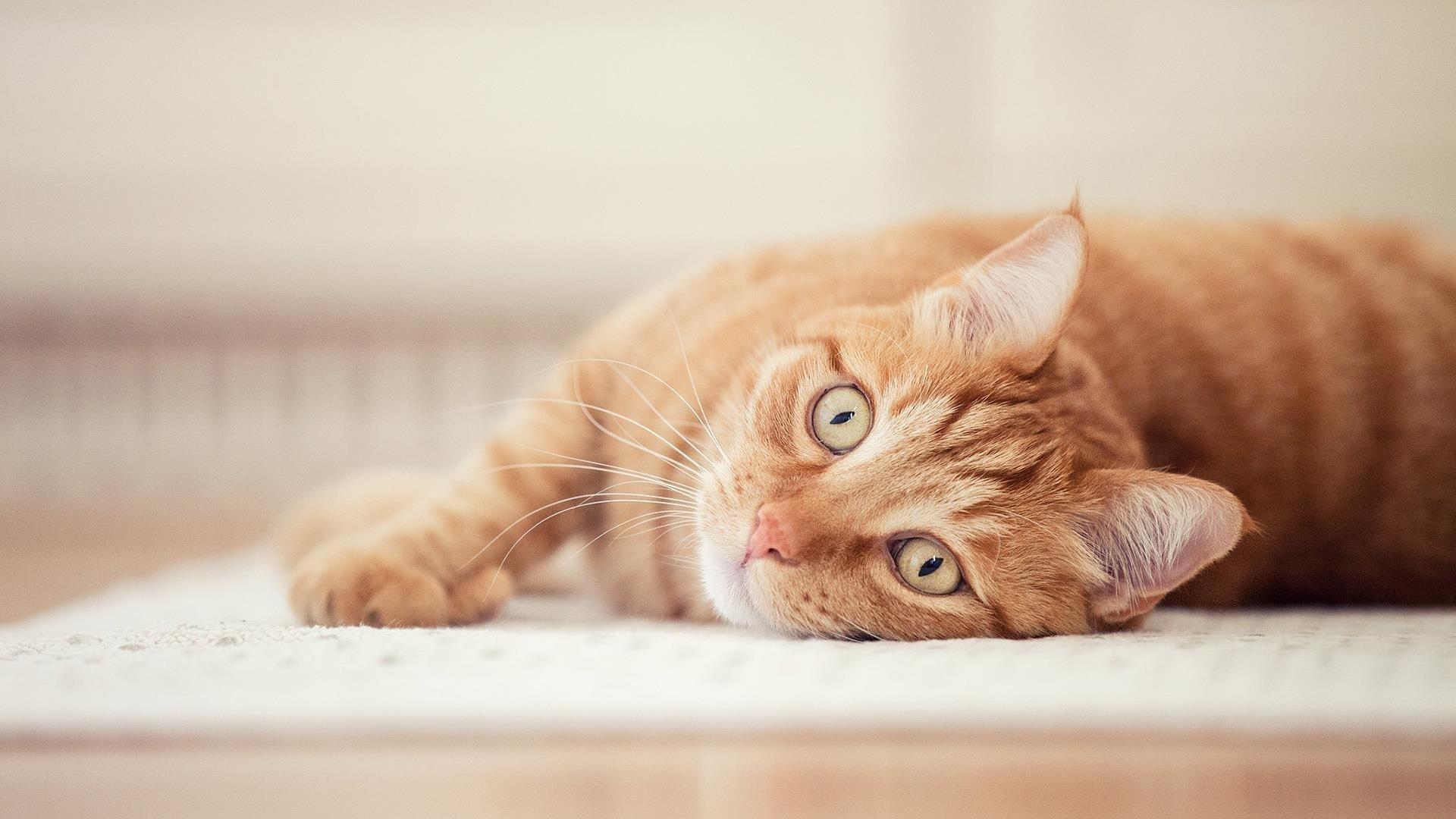 Животное кошка обои скачать